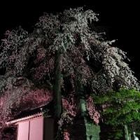 17年4/23~興禅寺~時雨桜~夜桜