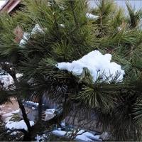 1月17日(火) 雪解けの朝