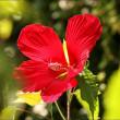 暑い・暑い! 今日も、花と野鳥写真を見て下さ~い!