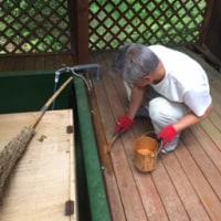 草刈り、芝刈り野良仕事にペンキ塗り、発芽芝生の中に〜 ‼︎