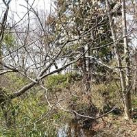 T-SITEと早春のこんぶくろ池