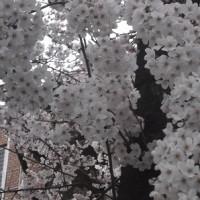四月「工房夢楽天の活動」予定