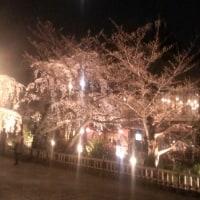 祇園の桜、詩客