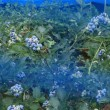 野に咲く花 鳴沢 4