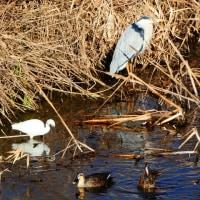 『春の小川』 水温む