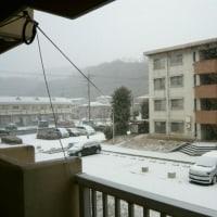 なんと雪!