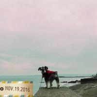 犬と旅行第3回目:三浦海岸と鎌倉&横須賀その①鎌倉銭洗弁天と瑞泉寺