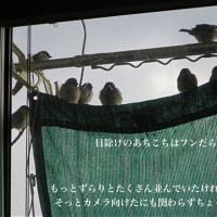 1/14土曜日…気温もお天気もバラバラ日