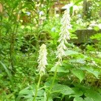 my garden~春から初夏へ。