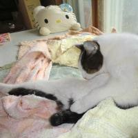 (5/2)寒い日。老いの猫たち。