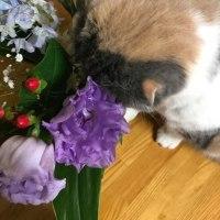 花は好きだけど。
