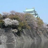 名城公園 しだれ桜