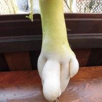 日記(芸術的な野菜)