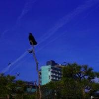 びわ湖畔の日本晴れ