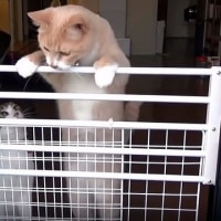 猫のベランダへの逃亡防止柵はどうでしょう!?