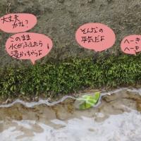 小さな苔さがし〜田んぼの用水路にも春が来た。