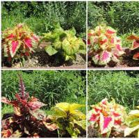 庭 の 花