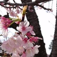 <鎌倉のリス。>