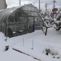 ついに大雪だ!