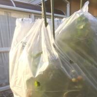 お野菜もお花も冬支度 & ジュリアンのハンギング作りました