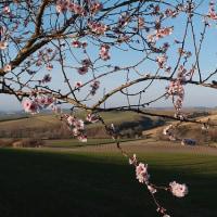 春、春、春