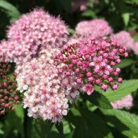 気圧の変化を直に感じるとお天気痛が⁉️しかし、美しい花を見ると癒されます。