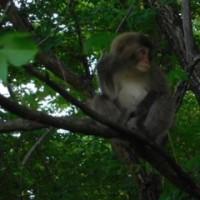 今朝のお猿さん!