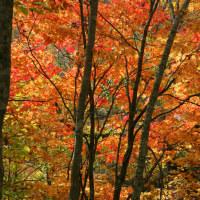 八幡平の紅葉に魅せられて