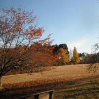 11月14日 雨
