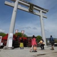 京都府長岡京市の「長岡天満宮」の「キリシマツツジ」が満開です。