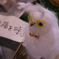 白いフクロウが幸福を??
