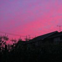 昨日の夕焼け・・・・・♪