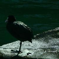 一休み 琵琶湖