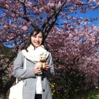 満開!河津桜お花見ハイク 見頃を迎えました!