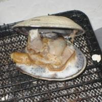 巨大アサリとハマグリの網焼き