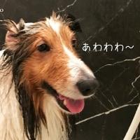 洗車用スポンジでシャンプーしてみたら、大成功~♪ヾ(*´∀`*)ノ
