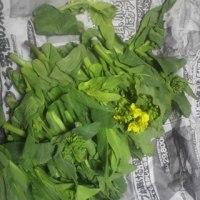 土手の散歩(リハビリ)と 菜花の収穫