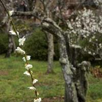 春晴れの卒業式 3月17日(金)晴れ