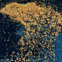 金木犀は夜空の星のように