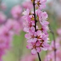 神奈川県立花と緑のふれあいセンター