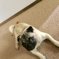 枇杷を食う犬