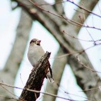 小鳥探し・・・