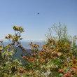 鏡台山にも行ってみる・・・◆富士見の岩(富士見台)