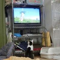 にゃん2017/2/27(月)ネコ歩きとヨモ