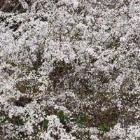 タニダガーデンの花