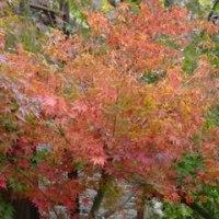 中野邸美術館紅葉し始め♪