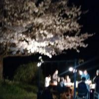 ~窯場の桜・夜の宴~