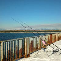 東埠頭で釣り
