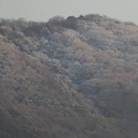龍ノ口山の霧氷