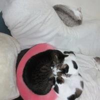 猫と、プリンの日